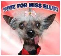 Vote for Miss Ellie!